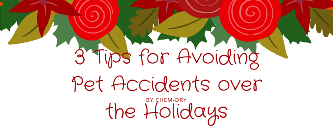 3 Tips for Avoiding Pet Accidents Over the Holidays